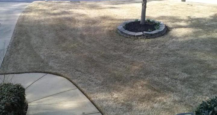 Bermuda Lawn - Dormant